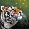 Kartinka tigra_10