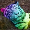 Kartinka tigra_15