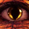 Kartinka tigra_27